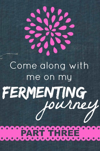 My Fermenting Journey, Part 3