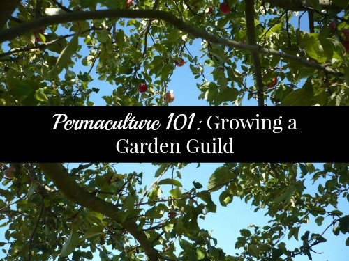 Permaculture 101 Growing a Garden Guild