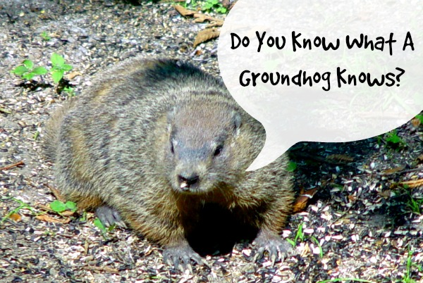 groundhog survival
