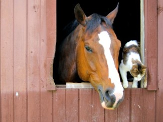 Stable Buddies from FreeImages.com