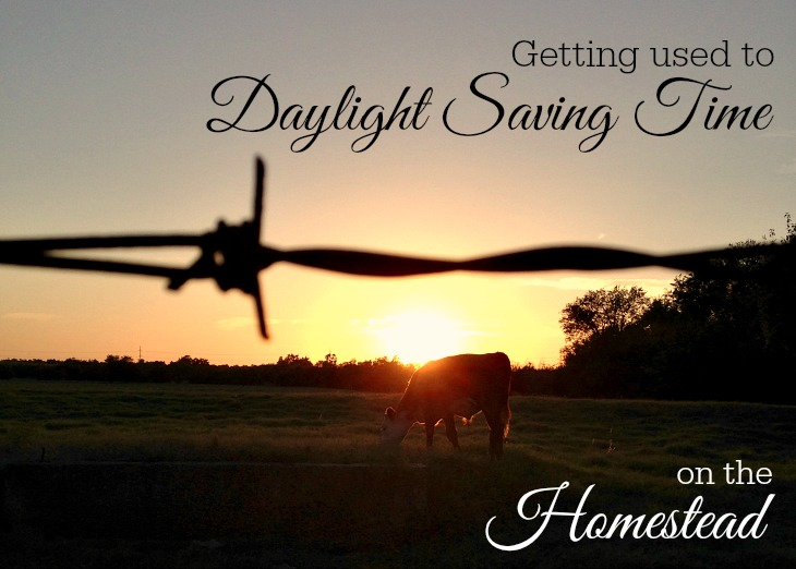 Getting used to Daylight Saving Time on the Homestead
