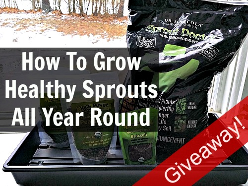 grow healthy sprouts