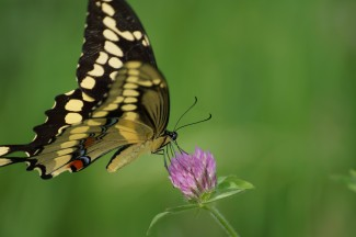 Make sure that you maintain diversity in your garden to support pollinators such as butterflies. Photo: Morguefile / LLMueller