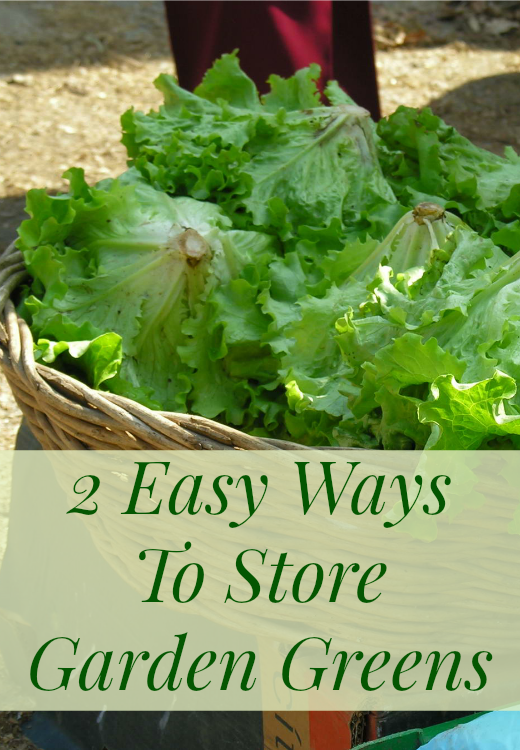 2 Easy Ways to Store Garden Greens for Future Use