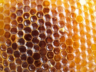 Ask your beekeeper about her beekeeping practices to ensure that your honey comes from healthy bees. Photo: Morguefile / bhjoco