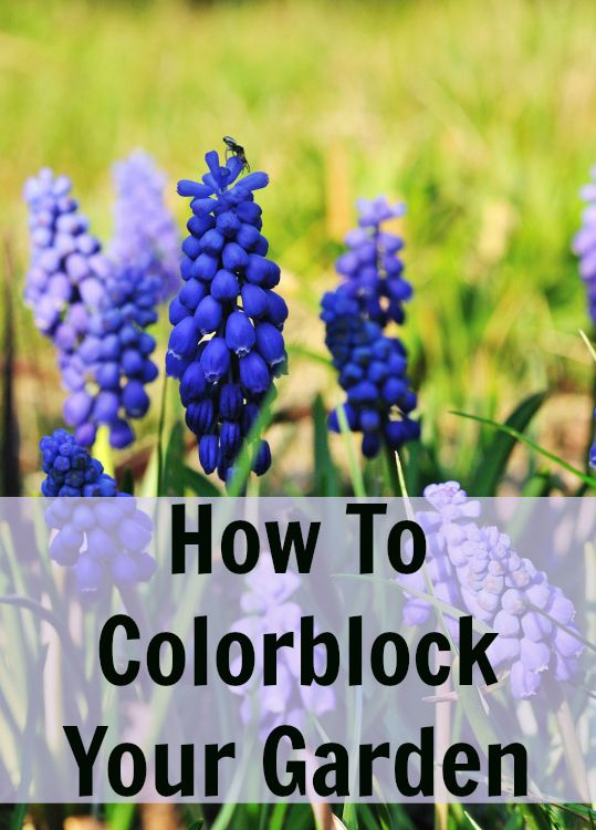How to Colorblock in Your Garden