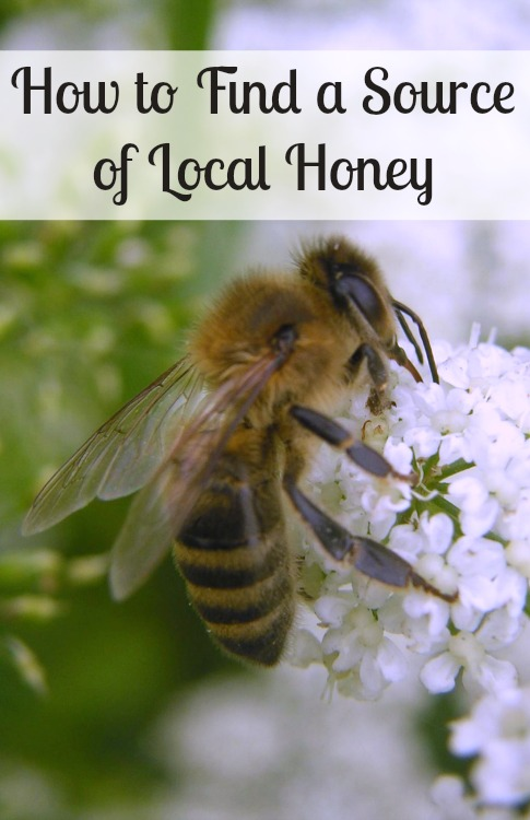 how to find local honey