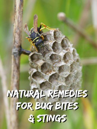 Natural Treatments for Bug Bites and Stings