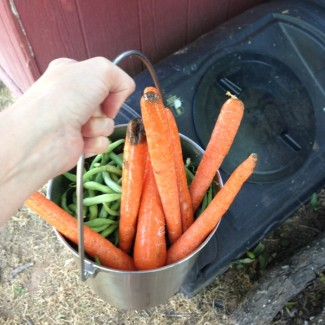 Adding scraps to the compost tumbler