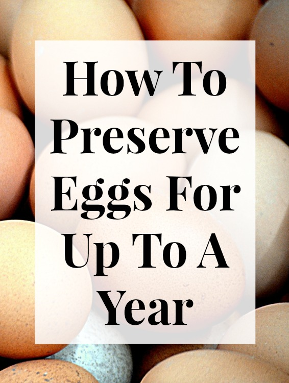 You Can Preserve Fresh Chicken Eggs For Up To A Year