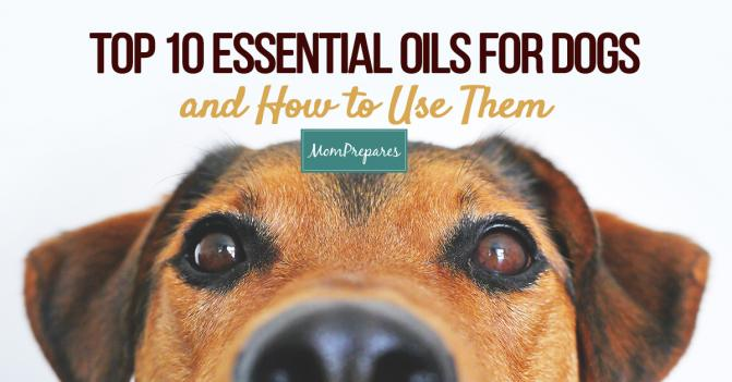 Top 10 Essential Oils for Dogs (and How to Use Them)