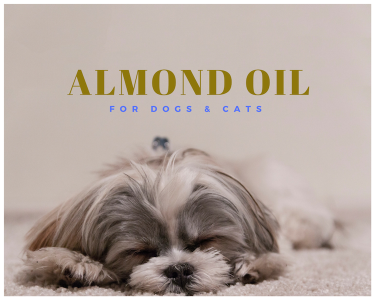 Almond Oil for Pets