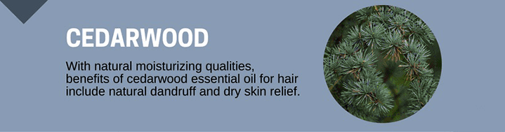 Cedarwood Oil for Hair Growth