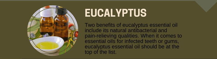 Eucalyptus Oil for Toothaches
