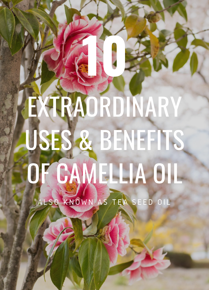 Camellia Oil Benefits and Uses